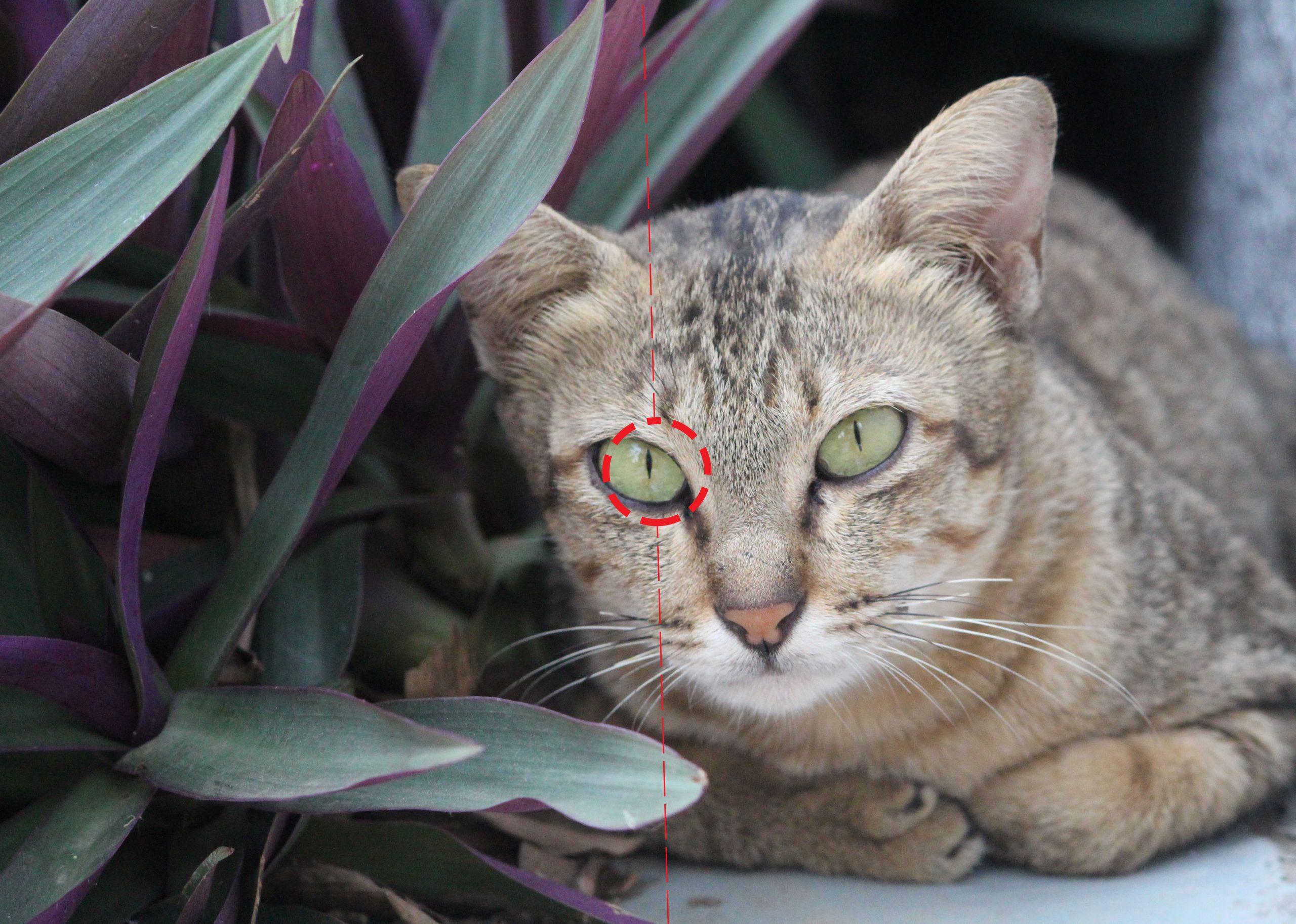 Bố cục mắt trung tâm - động vật