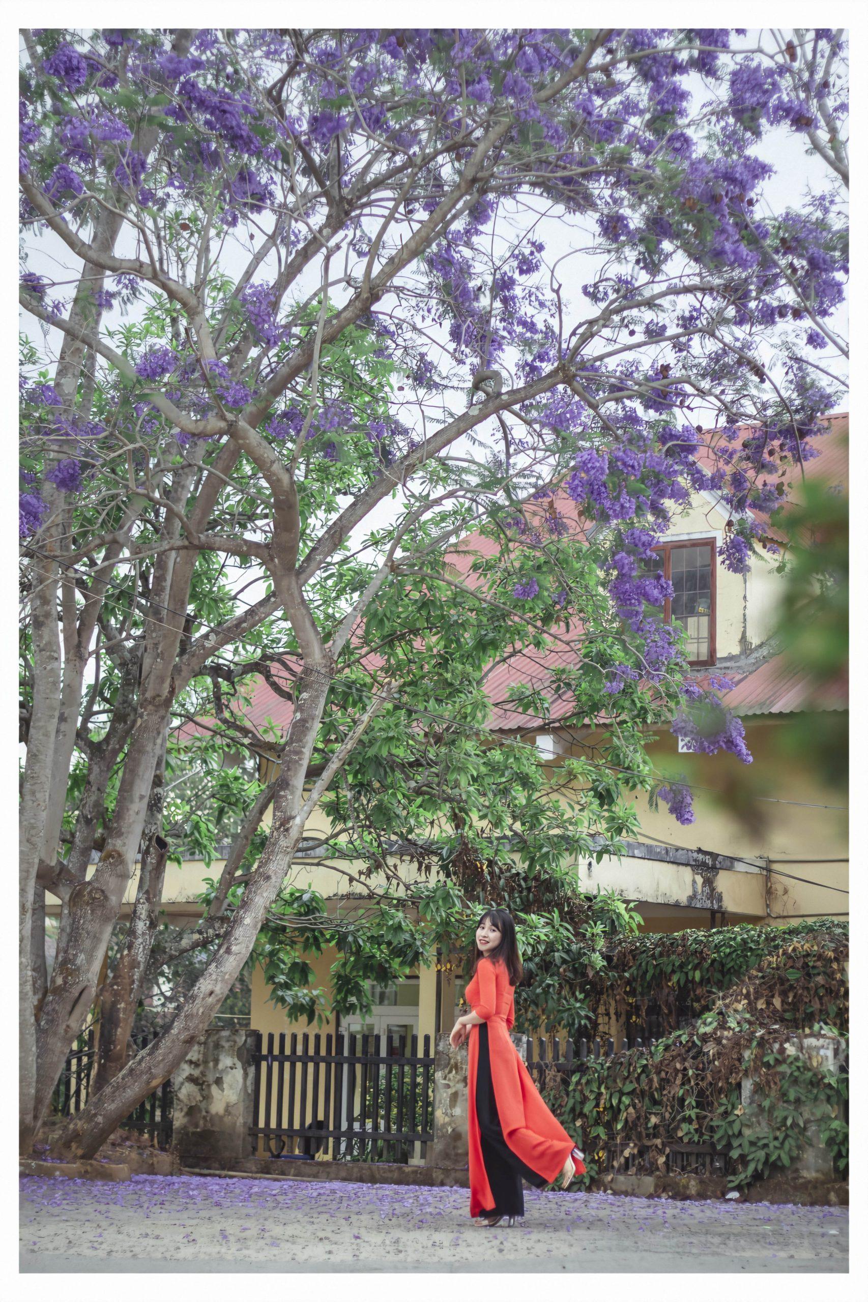 Thời điểm tháng 3 này đang là mùa hoa phượng tím ở Đà Lạt
